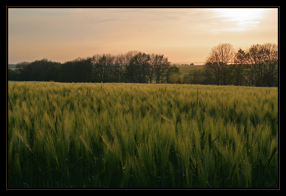 Feld in der Abendsonne