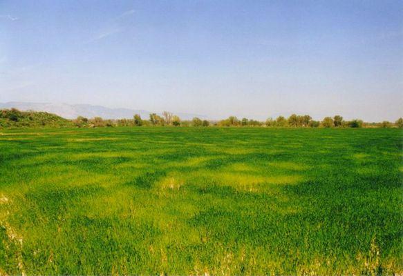 Feld in der SW-Türkei
