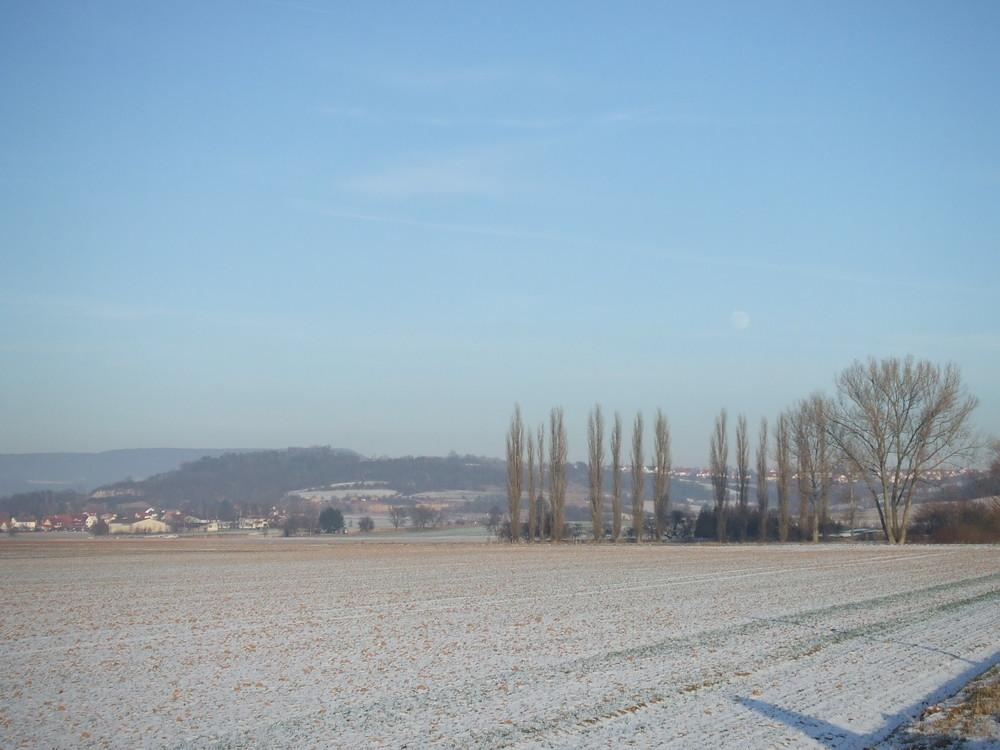 Feld mit Mond über den Bäumen
