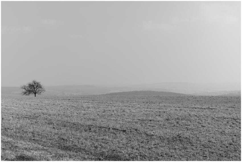 Feld und Baum