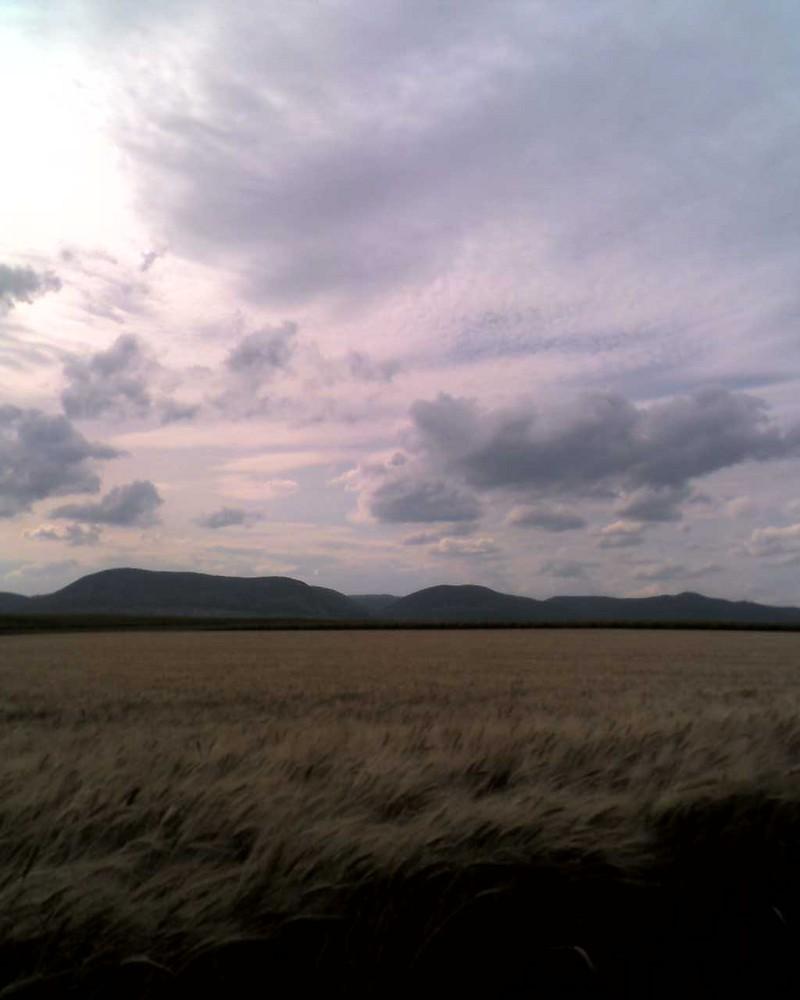 Feld und Pfälzer Wald im Hintergrund.