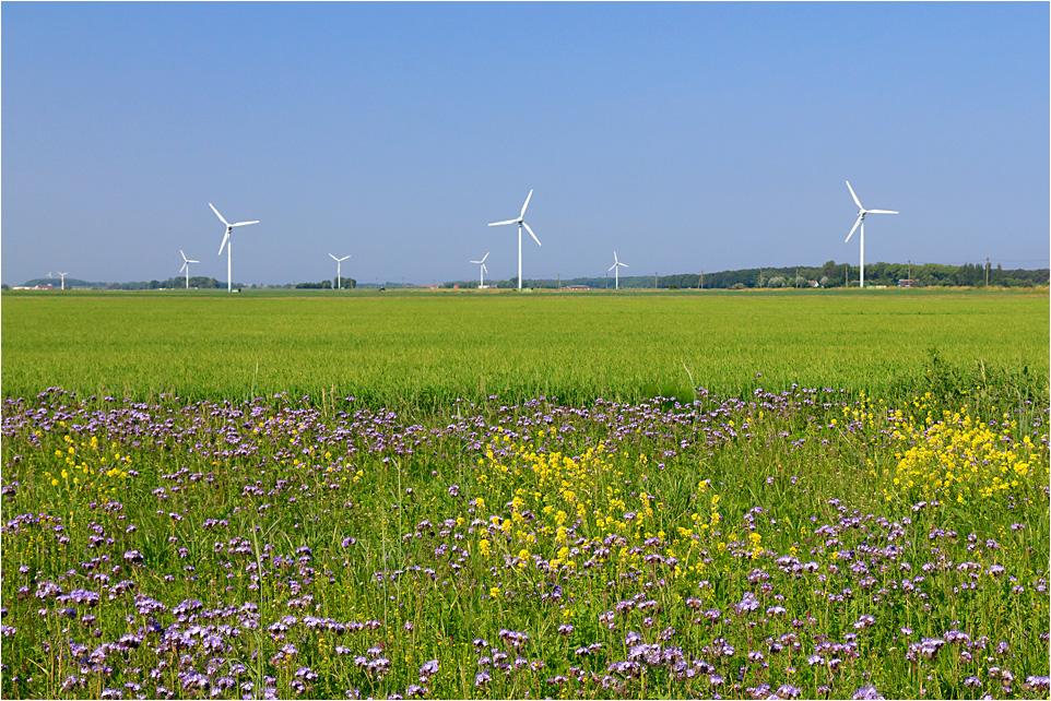 Feld- und Stromlandschaft
