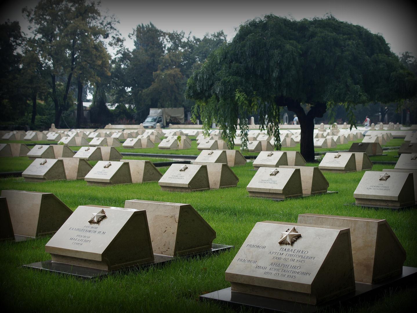 Feld von Grabsteinen in Budapest noch 1945 gefallener sowjetischer Soldaten