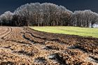 Feld - Wald - Wiese