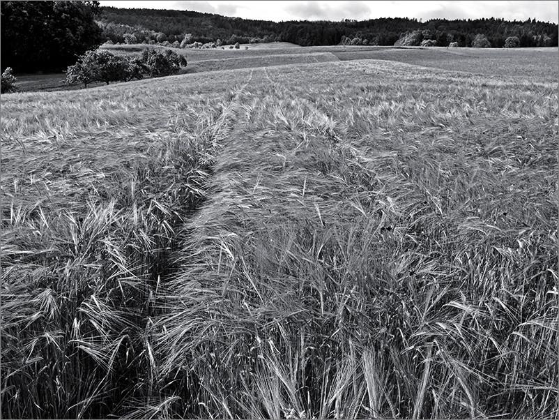 Feld, Wald, Wiese II