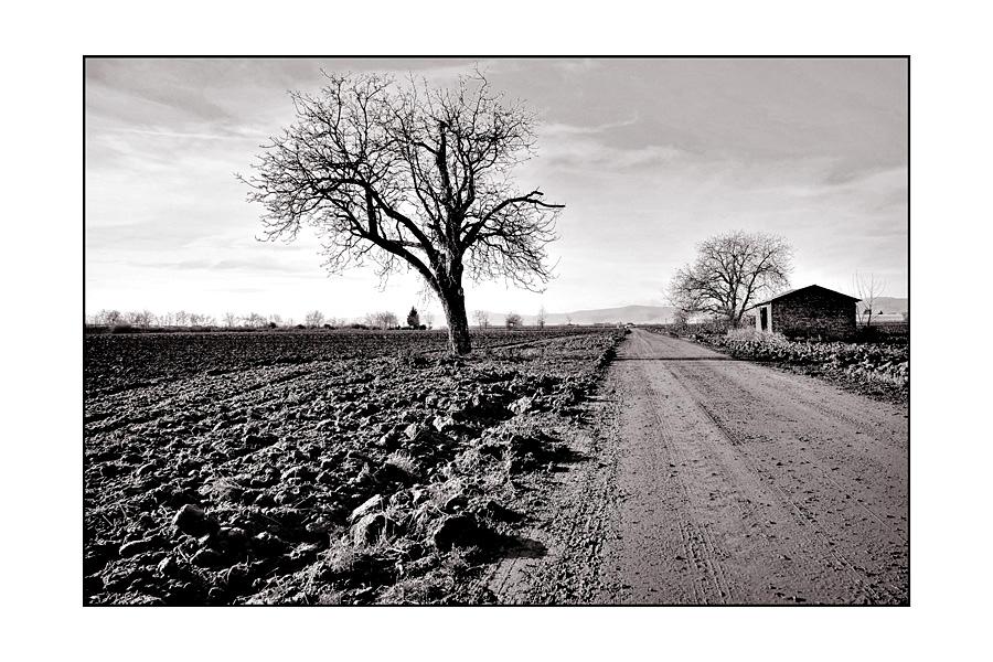 Feld: Weg; 2,5x Baum; Hütte
