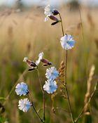 Feldblumen im Morgenlicht