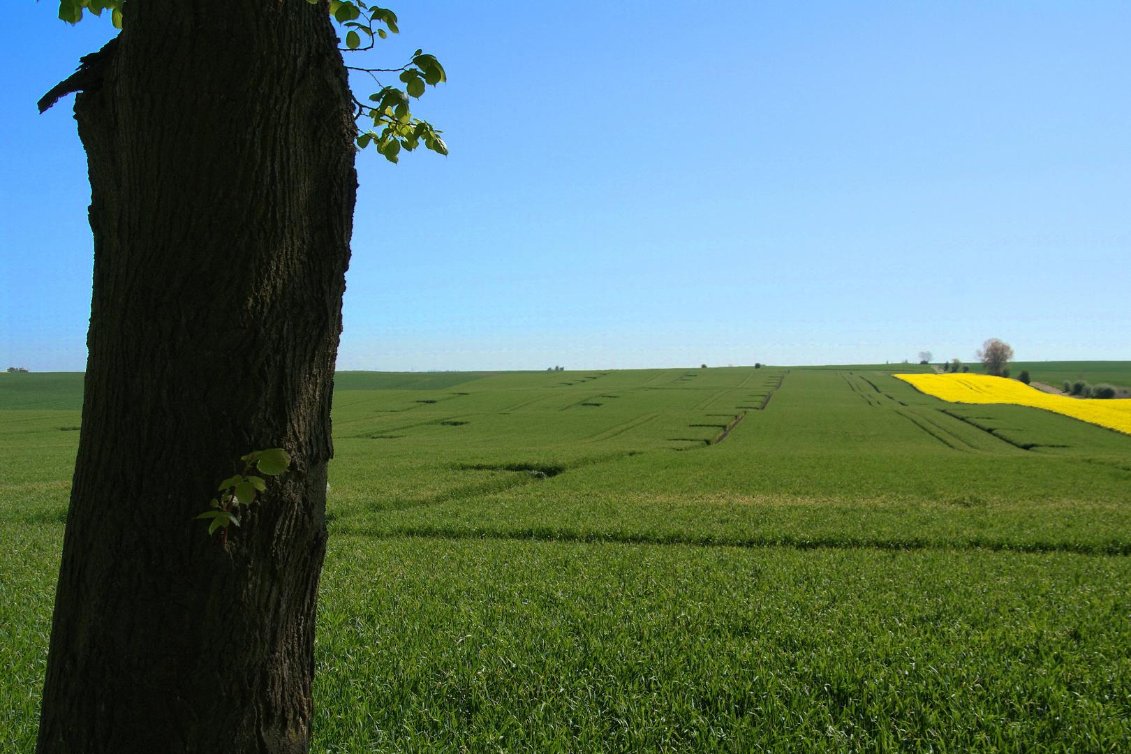 Felder auf Poel