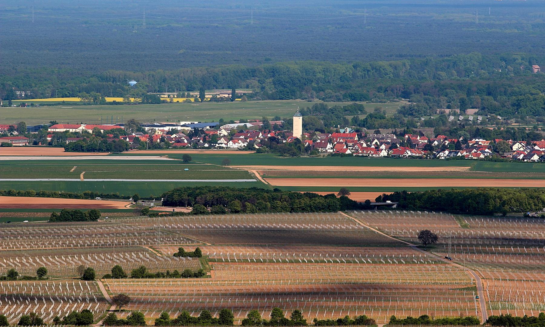 Felder bei Lachen-Speyerdorf