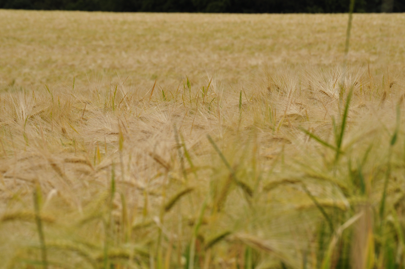 Felder der Natur