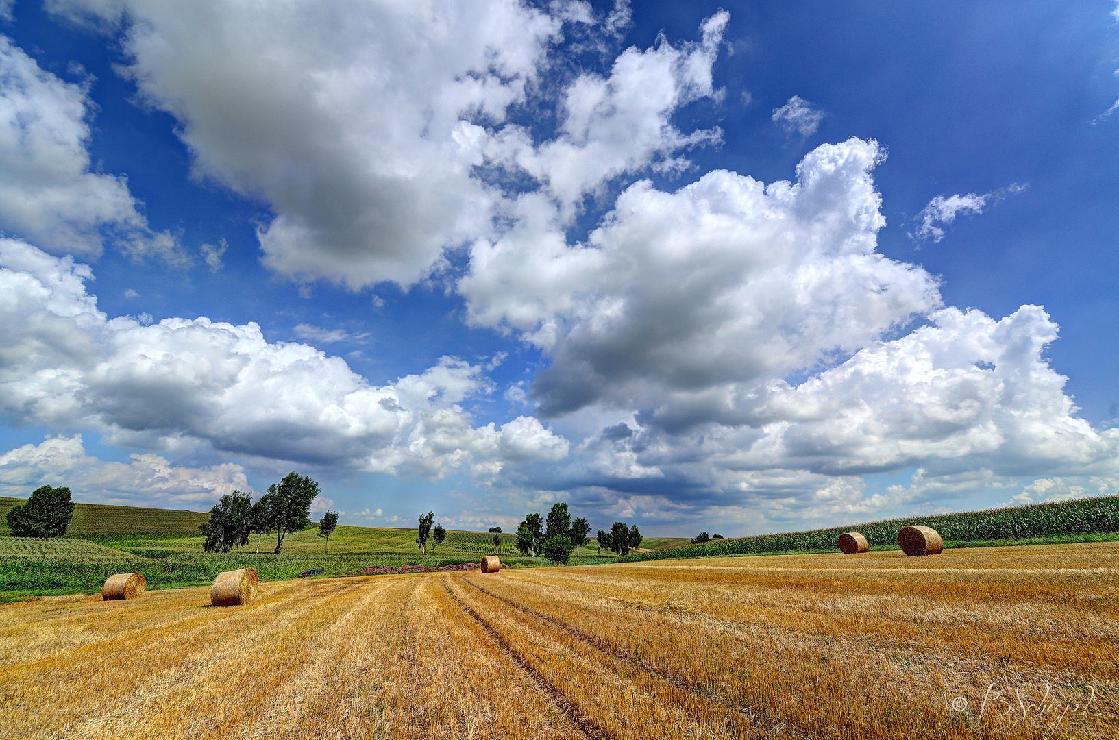 Felder im Elsass