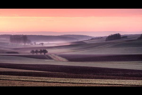 Felder im Nebel