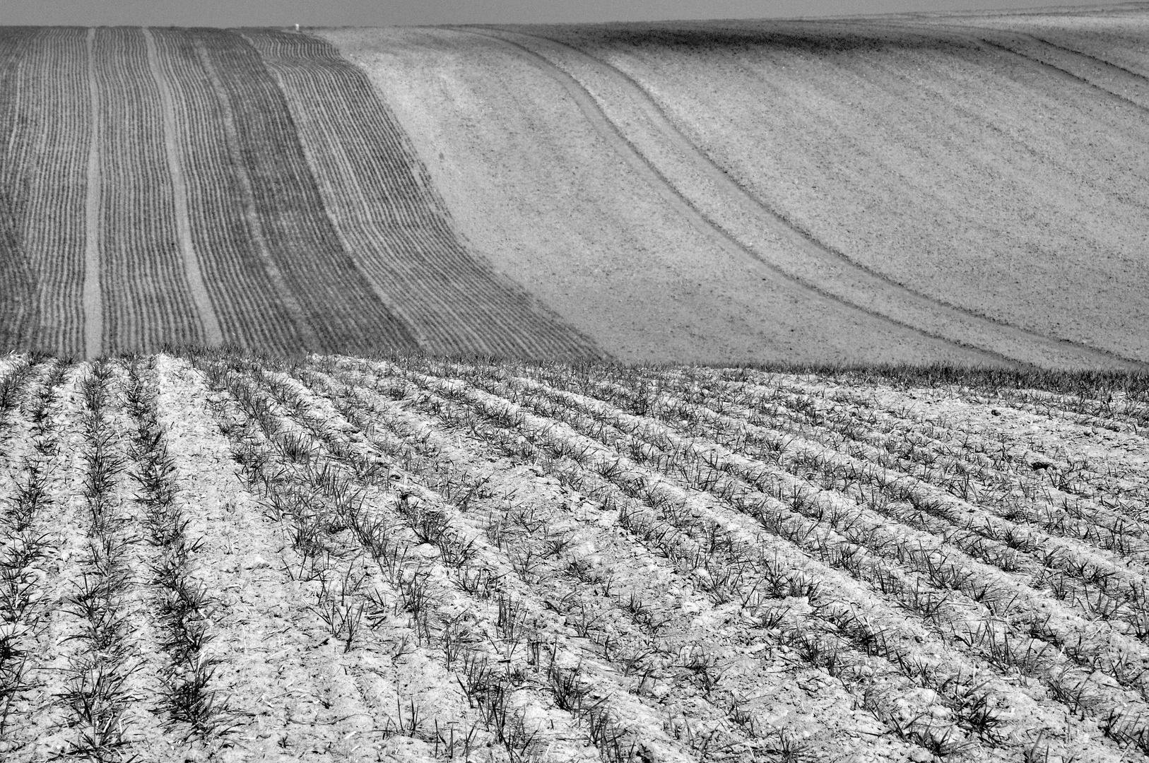 Felder im Weinviertel (Ö)