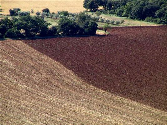 Felder in braun