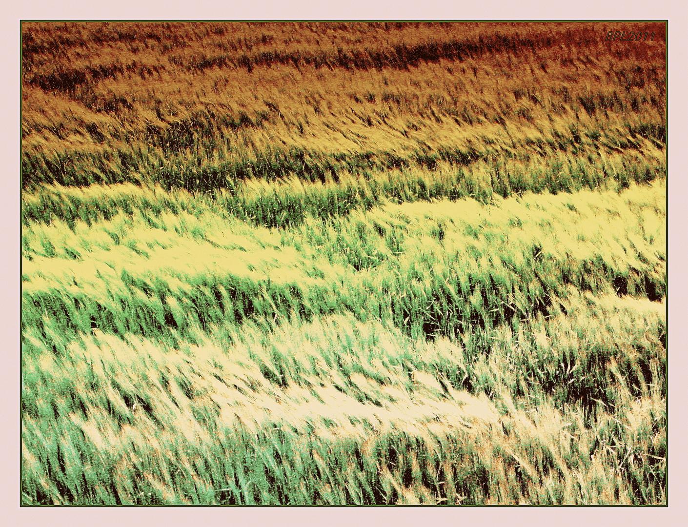 Felder in bunten Farben...