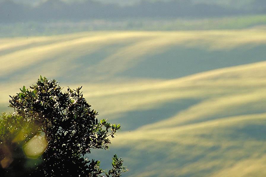 Felder in sanften Hügeln kurz vor der Ernte