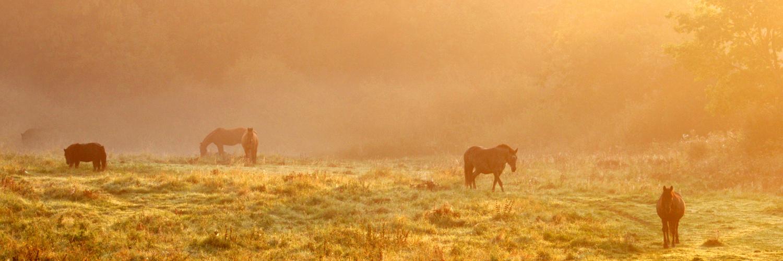 Felder und ihr Leben