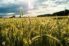Felder und Licht