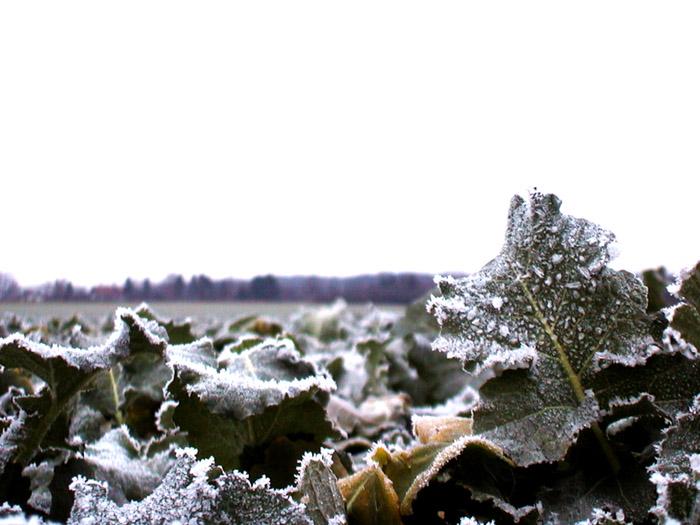 Feldfrost
