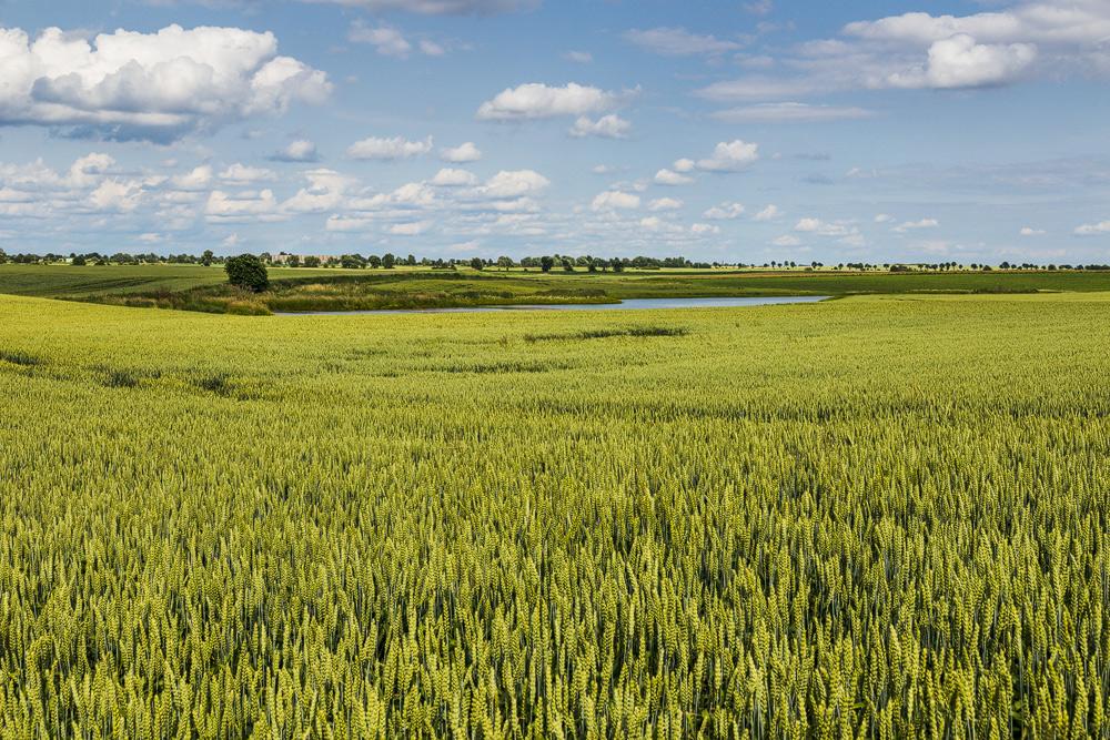 Feldlandschaft in Polen