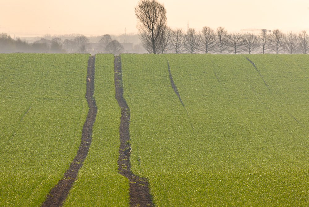 Feldspuren