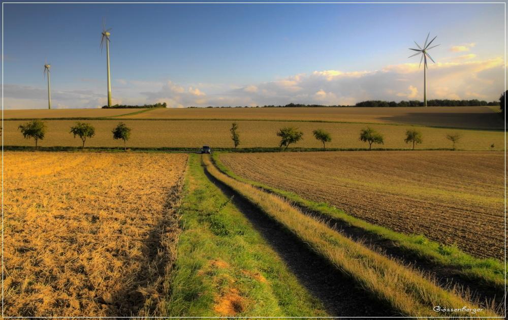 Feldweg VI
