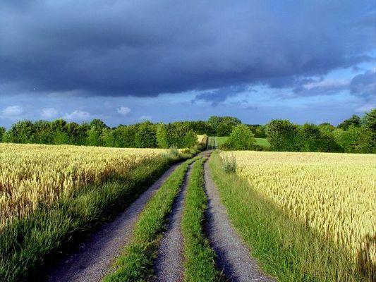 Feldweg zwischen Getreide:)