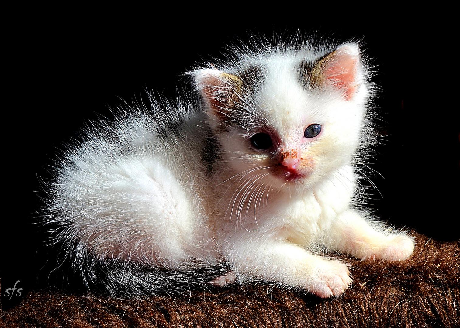 Feli 4 Wochen alt