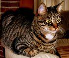 Feli hat KEINE blauen Augen ;)