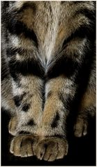 Feline Details