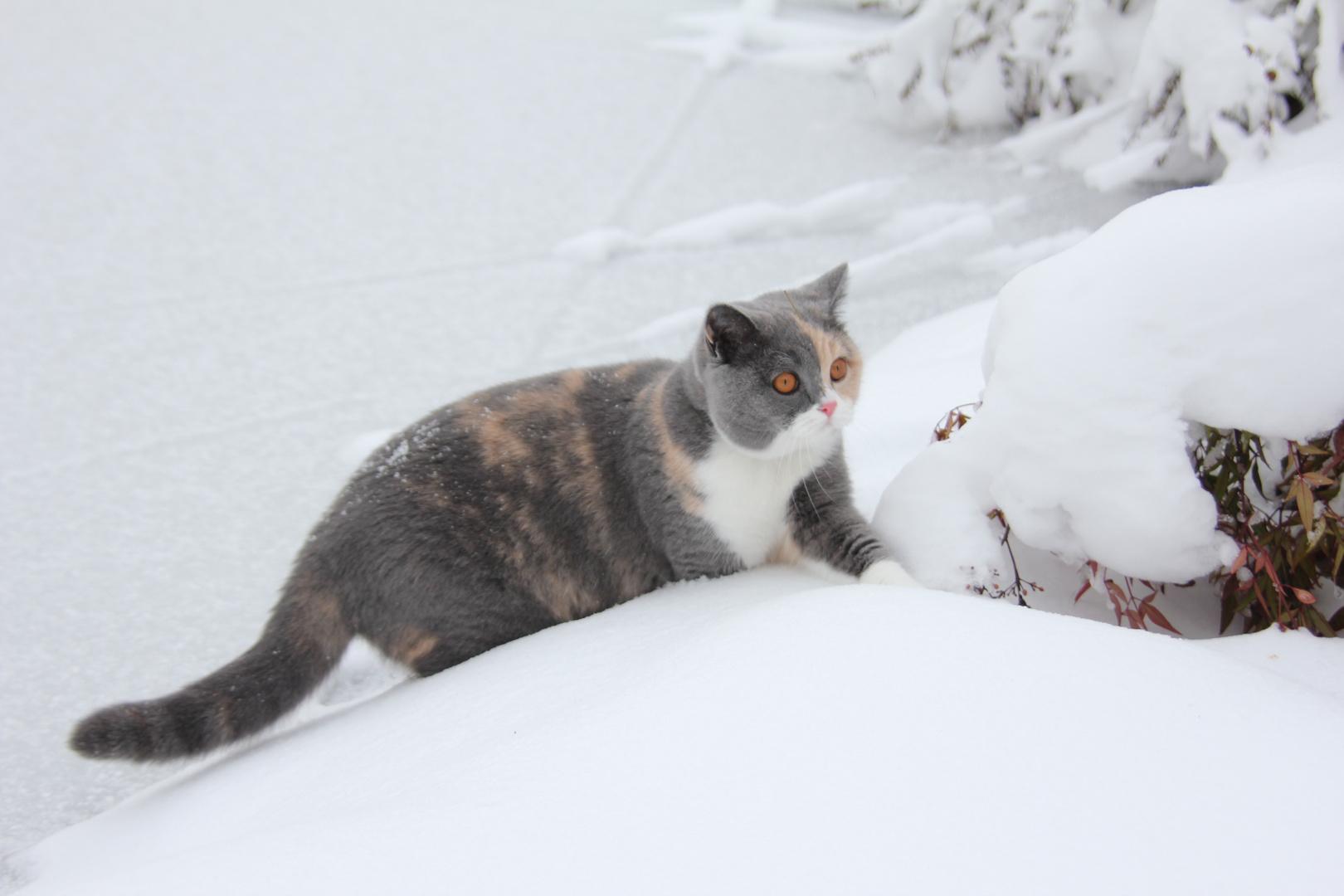 Felis erster Schnee