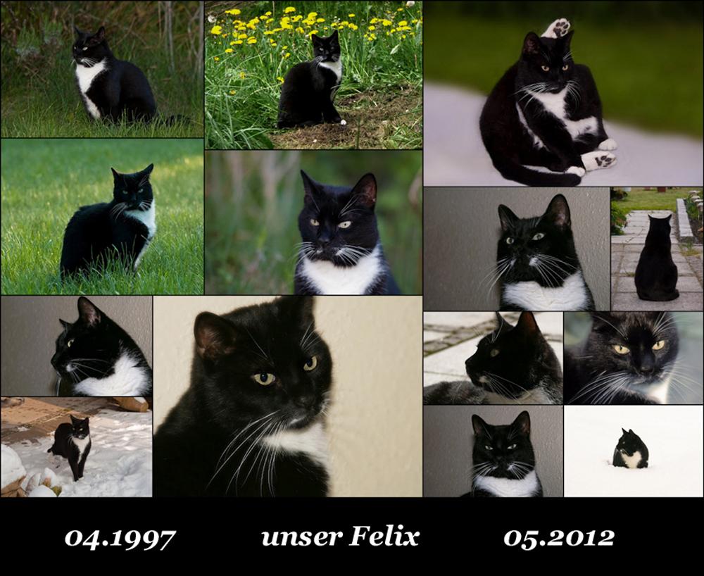 + Felix +