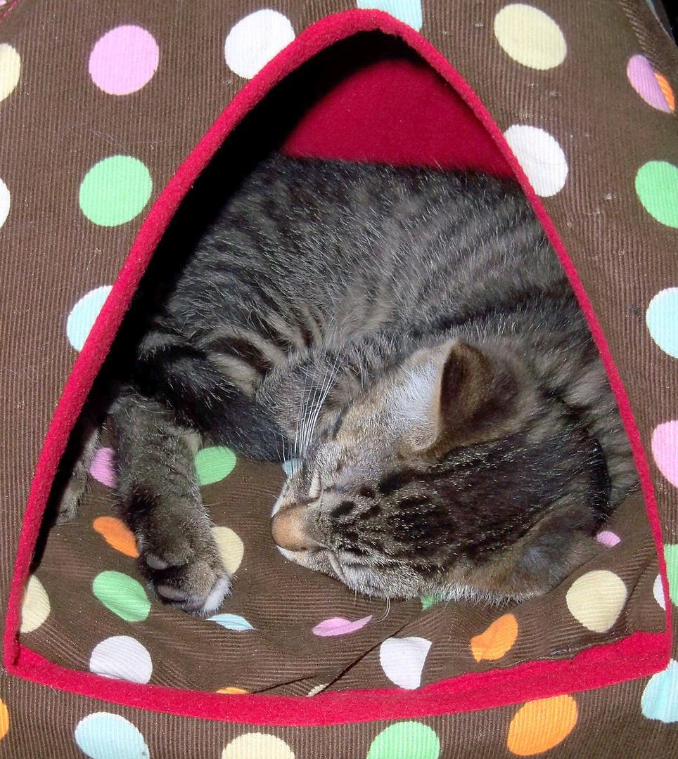 Felix beim Mittagsschlaf