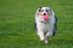 Felix... der glückliche - vor allem, wenn man mit ihm Ball spielt ;-))