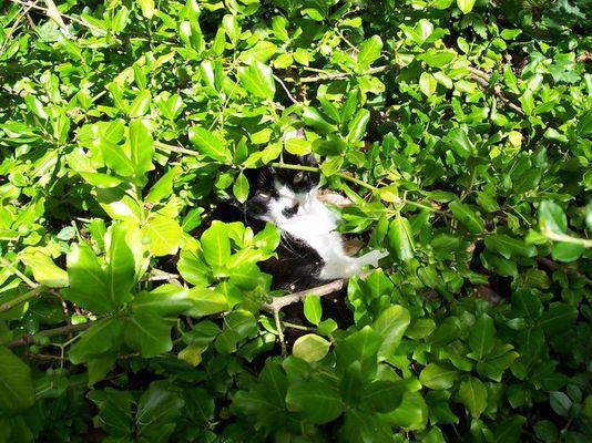 Felix, die Katze