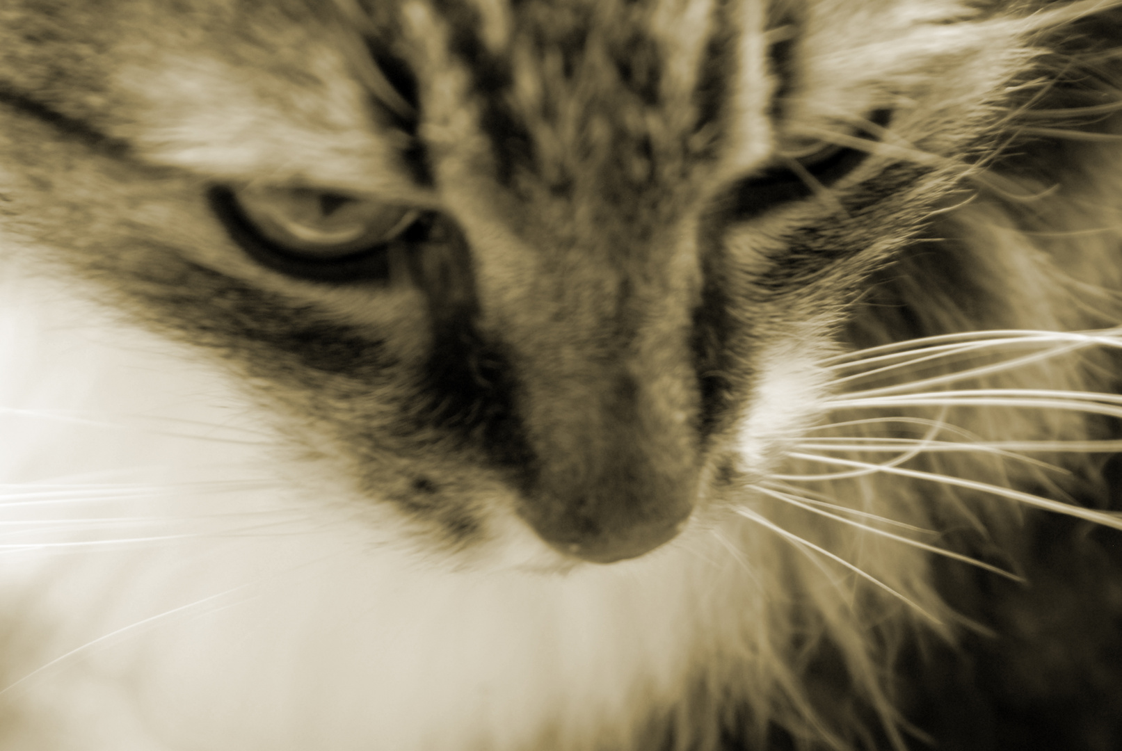 felix my tomcat