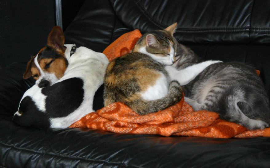 Felix, Smartie und Lea