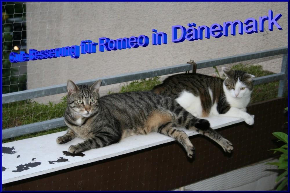 Felix und Samy wünschen Romeo in Dänemark gute Besserung.