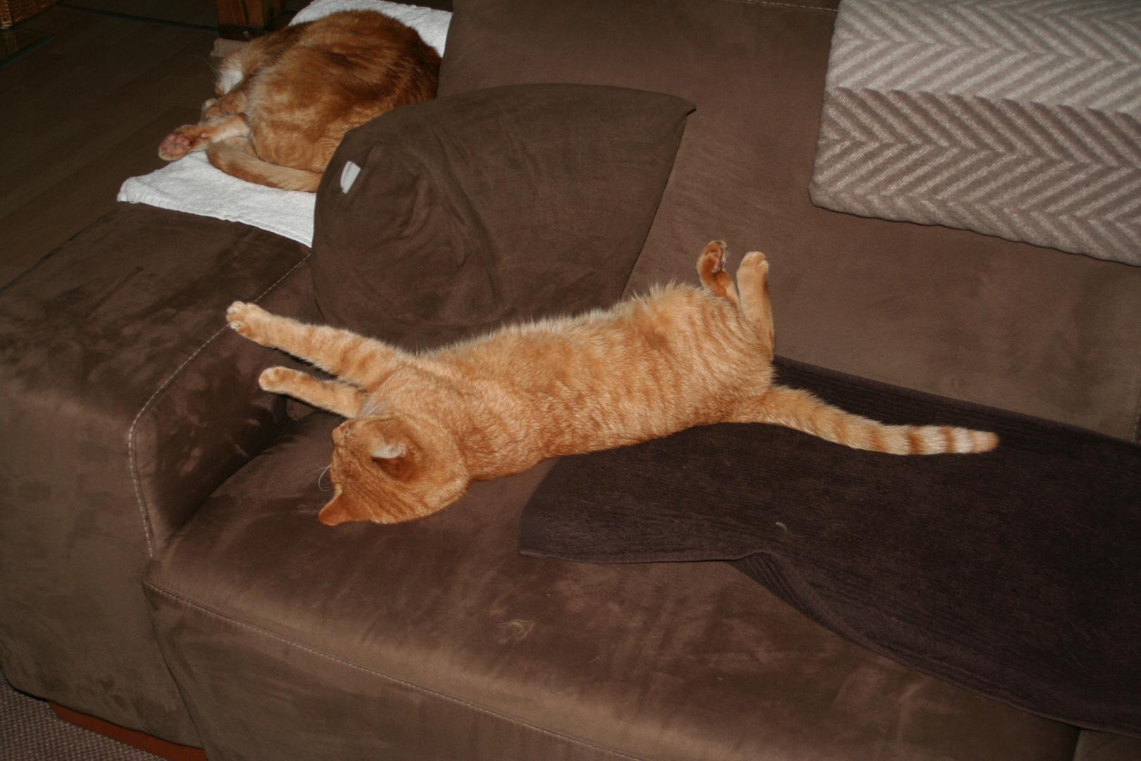 Felix+Garfield