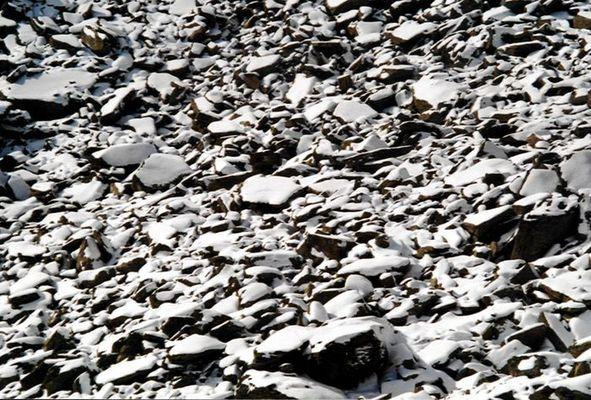 Felsen mit Neuschnee