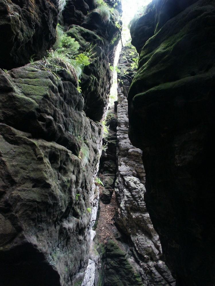 Felsspalte mit Leben