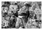 Felswand camouflage