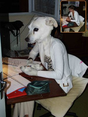 Femme chien au bureau