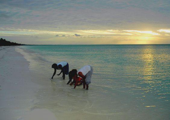 Femmes indigènes cherchant des coquillages.