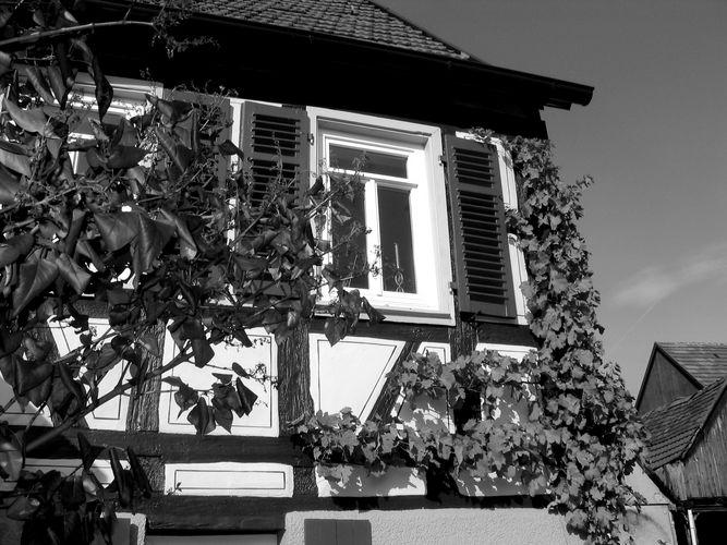 Fenster, Fachwerk, Wein, es herbstet.......