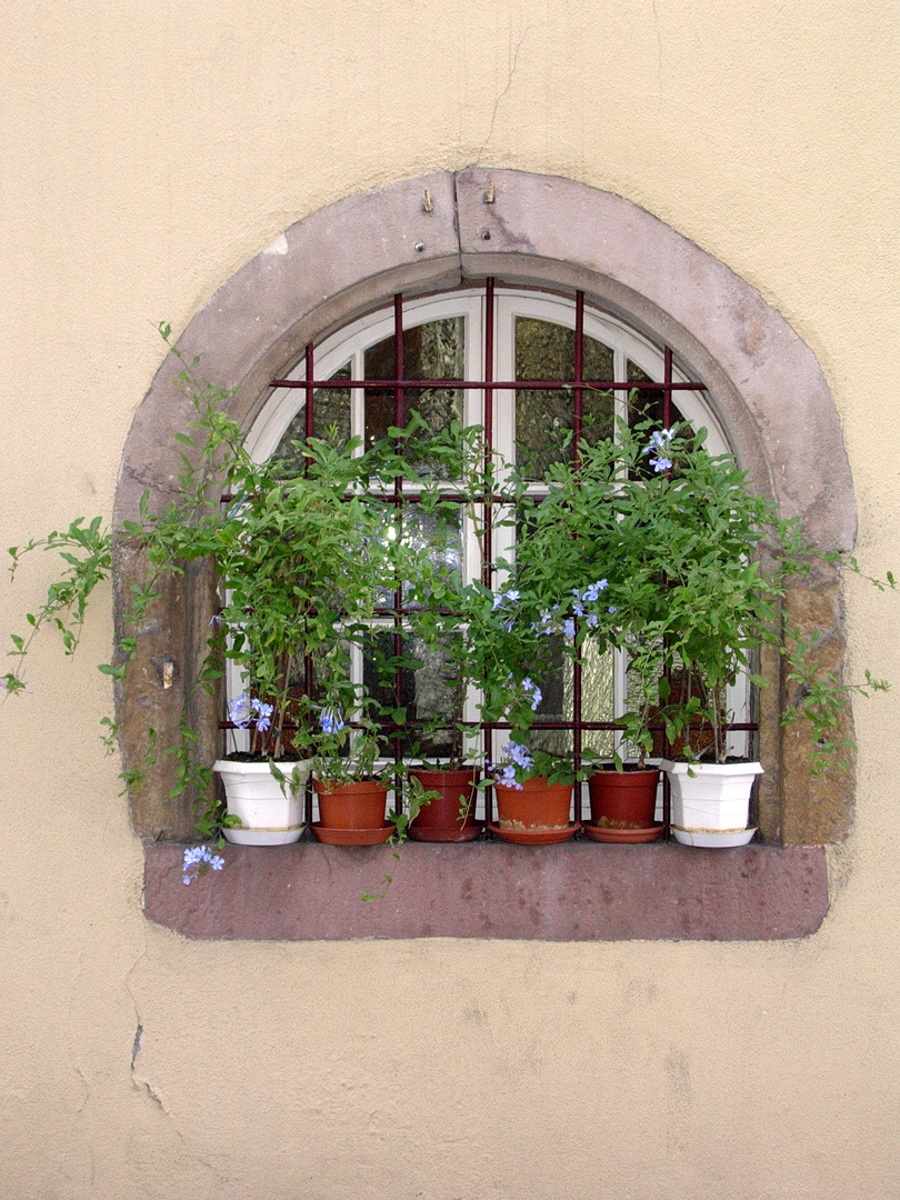 Fenster in Colmar