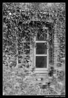 Fenster mit Ausblick (sw)