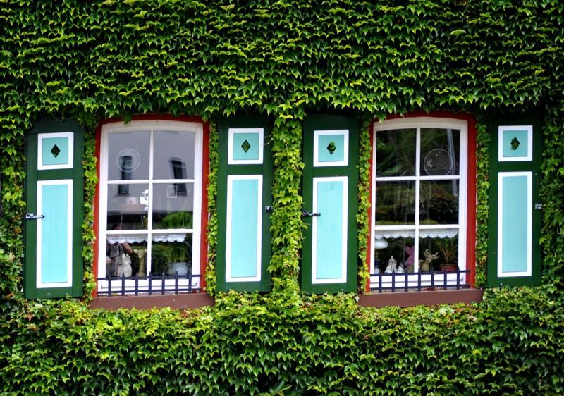 Fenster mit Weinlaub