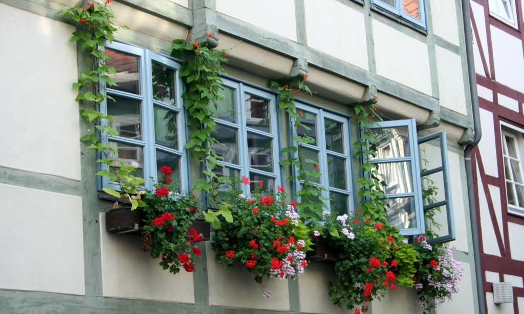 Fenster und Blumen im Fachwerk von Wolfenbüttel