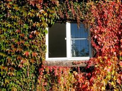 Fenster zum Haus